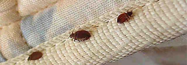 bed bugs pesticide